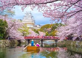 В столице Японии началось цветение сакуры