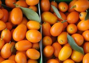 Назван помогающий предотвратить рак фрукт