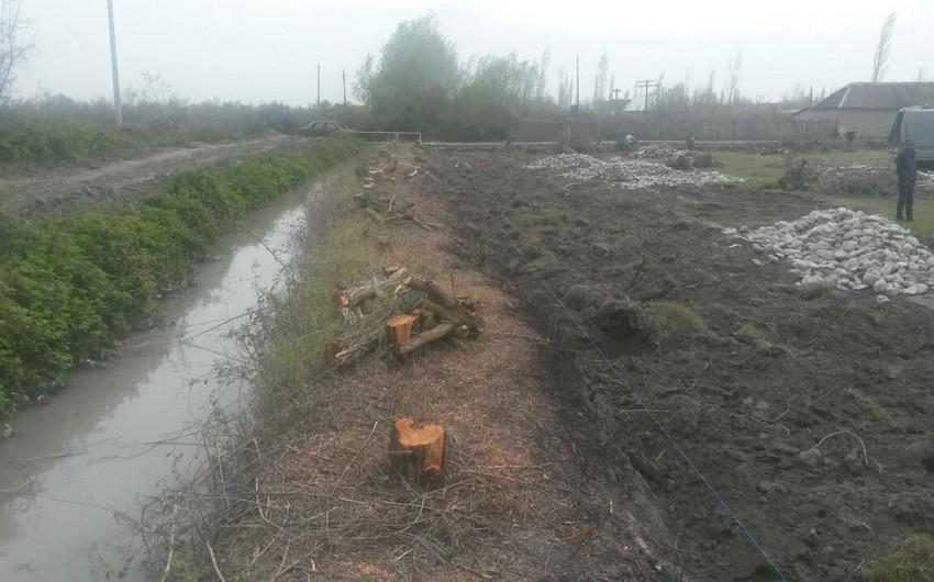 ETSN Ucarda 36 ağac kəsilməsi faktını aşkarlayıb