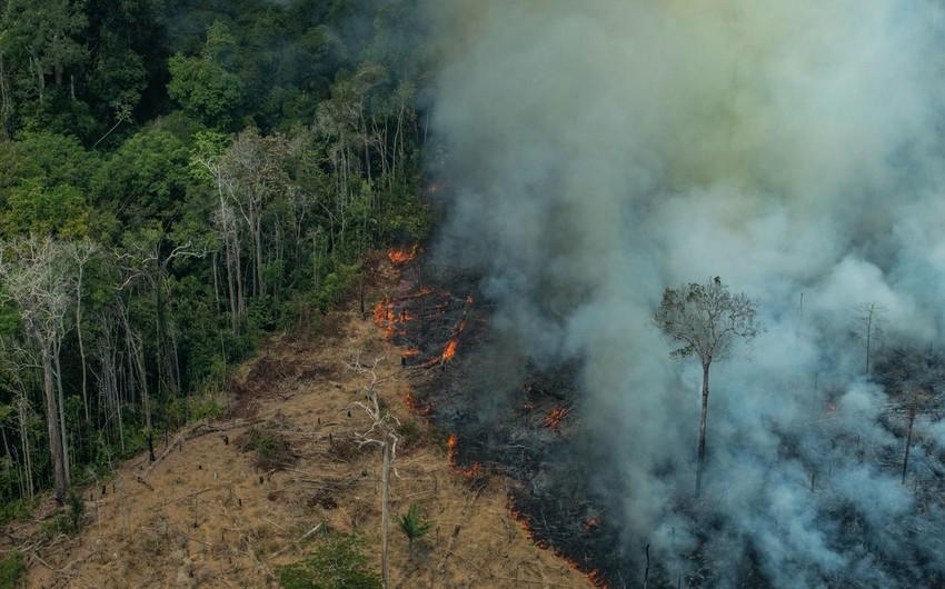 Amazonda yanğınların sayı rekord həddə çatıb