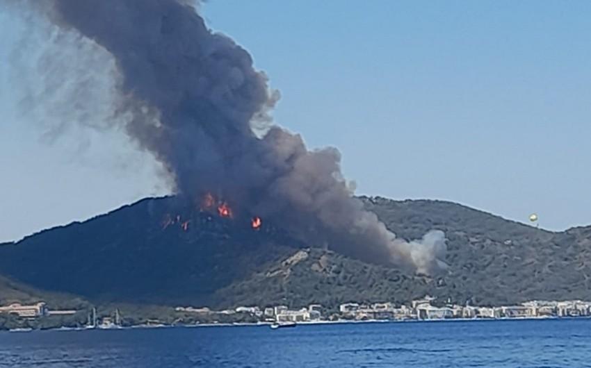 В Турции локализовали 57 из 71 очагов возгорания в лесах