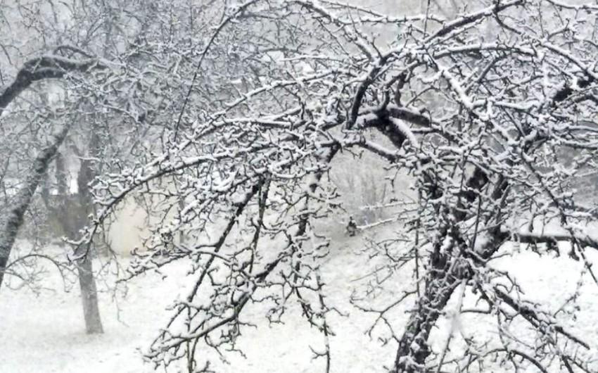 Qax rayonuna qar yağıb - FOTOREPORTAJ