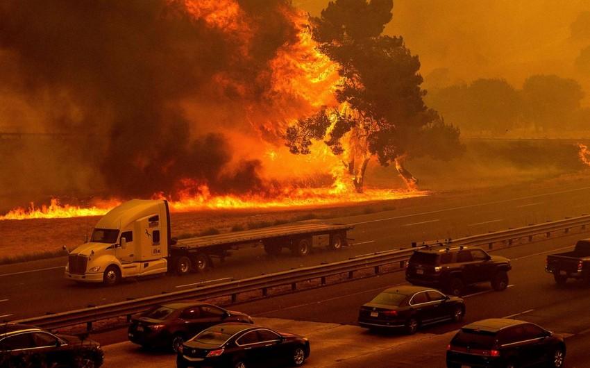 Жертвами лесных пожаров в США стали 33 человека