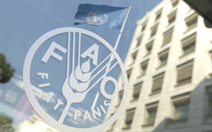 FAO-nun dəstəyilə Azərbaycanda balıqçılıqla bağlı layihənin icrası başlayır