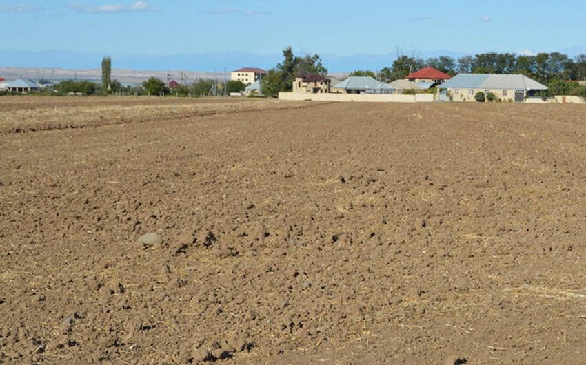 Bələdiyyələrin qanunsuz satdığı torpaqlardan 8 217 hektarı geri qaytarılıb