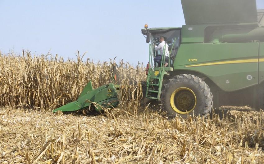 Спрос на продовольственное зерно: как положить конец зависимости от импорта?