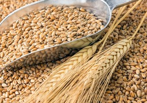 Export price for Russian wheat reaches record high