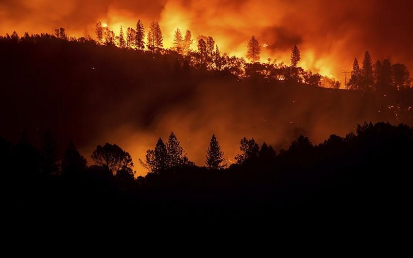 Kaliforniyada meşə yanğınları nəticəsində 71 nəfər ölüb