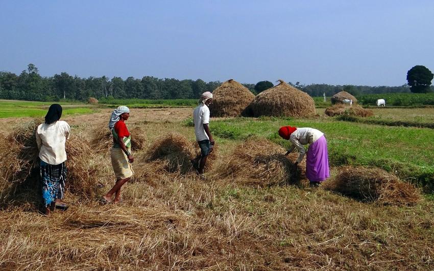 Фермеры в Индии перекрывают дороги в знак протеста против новых законов
