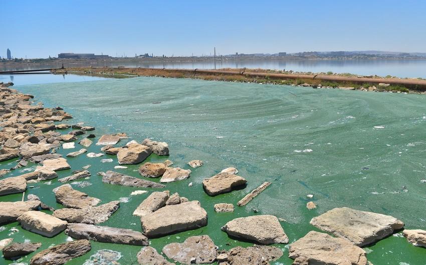 Hikmət Əlizadə: Böyükşor gölü müəyyən ekoloji problemləri olan su hövzəsidir