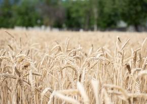 Азербайджан сократил импорт пшеницы на 19%