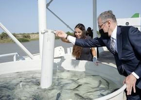 Лейла Алиева приняла участие в церемонии выпуска в воду мальков осетровых рыб