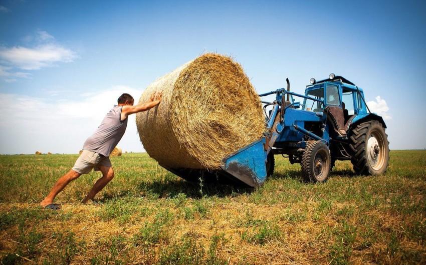 Аграрный сектор в Азербайджане вырос более чем на 7%
