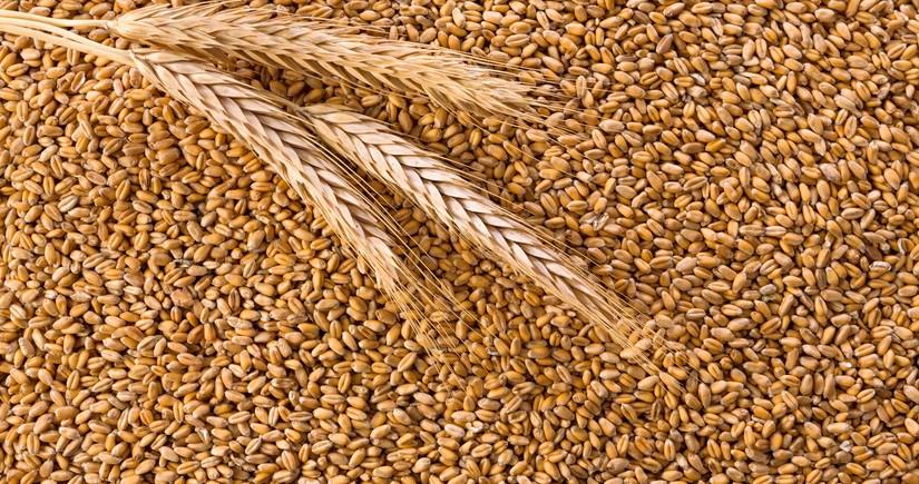 Стоимость российской пшеницы достигла рекорда 2014 года