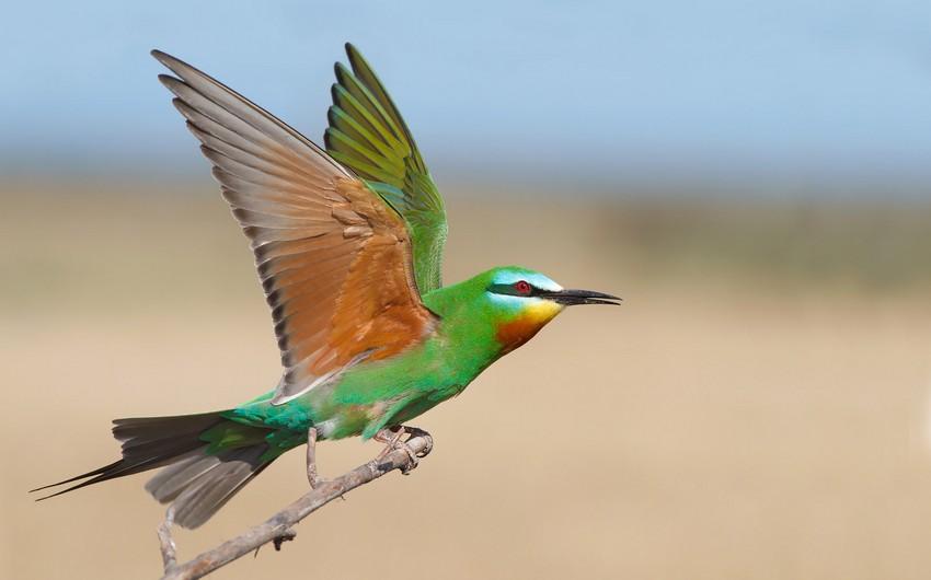 Azerbaijan - birders' breathtaking destination