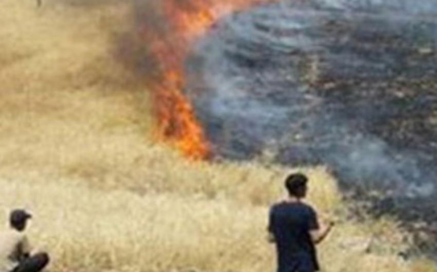Azərbaycanda iki min hektar otlaq sahəsi yanıb