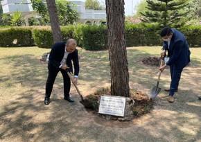 Heydər Əliyevin Pakistanda əkdiyi ağaclara qulluq göstərilib
