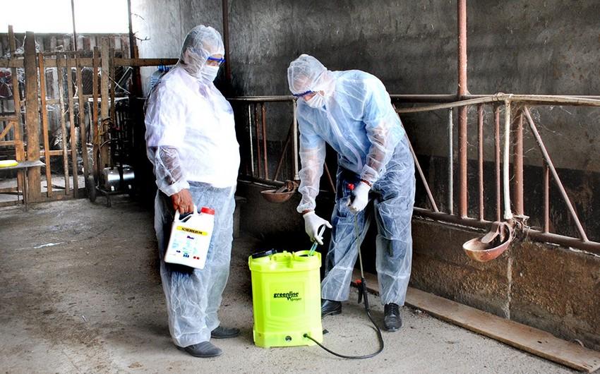 Yevlax rayonunda dezinfeksiya tədbirləri aparılır