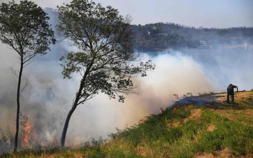 Fransada məktəbli kütləvi meşə yanğınları törətməkdə ittiham olunur