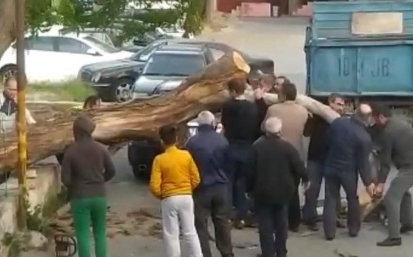 Bakıda külək ağacı avtomobilin üzərinə aşırdı