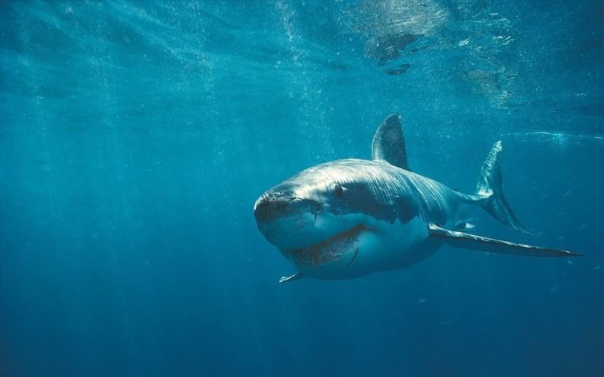 Braziliyada köpək balığı gənc oğlanı parçalayıb - VİDEO