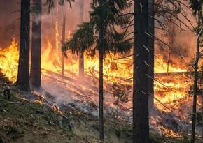 В Черногории пропавших при пожаре туристов удалось спасти