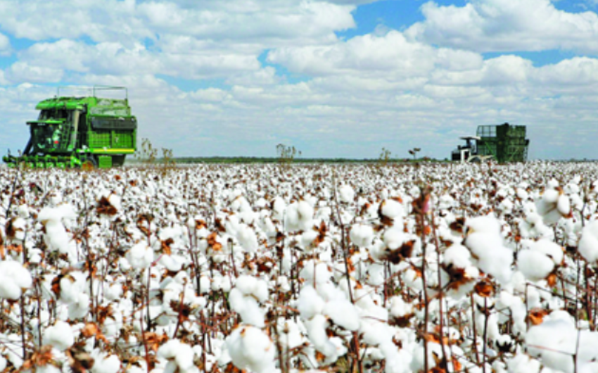 Azerbaijan to carry out reforms in sphere of production of cotton and breeding silkworm
