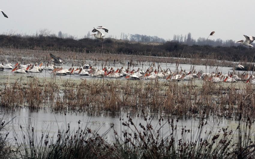 Azərbaycan Respublikasının Qızılağac Milli Parkı yaradılır