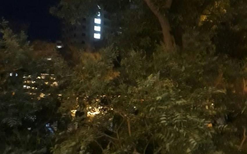В Ясамальском районе сломавшиеся ветки дерева упали на трех женщин - ФОТО