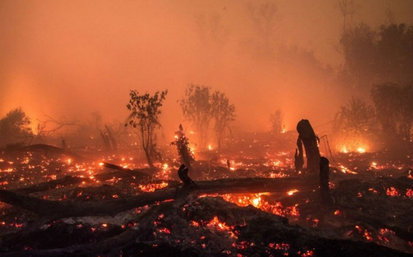 Indonesia's forest fire death toll reaches 24
