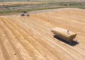 В Азербайджане в прошлом году аграрный сектор вырос на 2 %