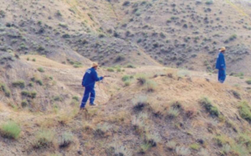 Zərdab-Şıxbağı-Qışlaq neft sahəsində çöl işləri aparılıb