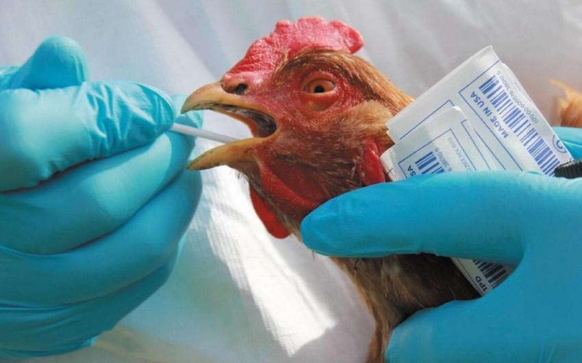 В Бельгии зафиксирована вспышка птичьего гриппа