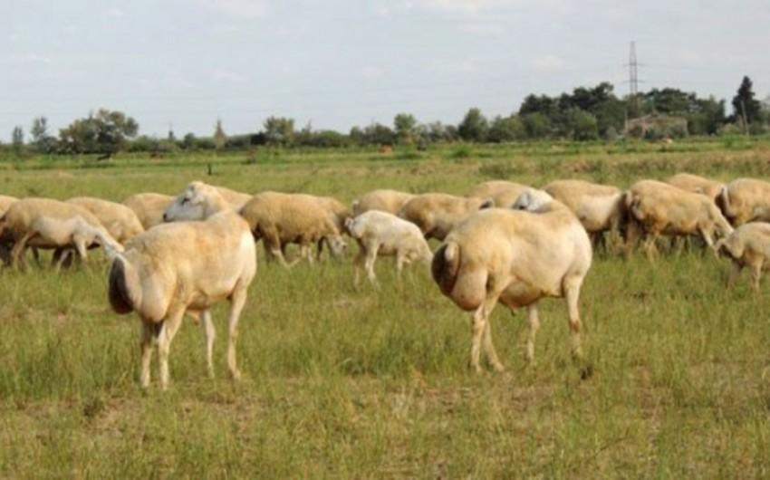 Кабмин Азербайджана расширил перечень заболеваний животных, лечение которых финансируется из госбюджета