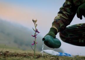 Министерство культуры подготовило видеоролик под названием Хары бюльбюль