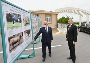 Artificial Insemination Center launched in Nakhchivan