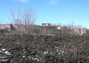 Кадры из села Учбулаг Физулинского района