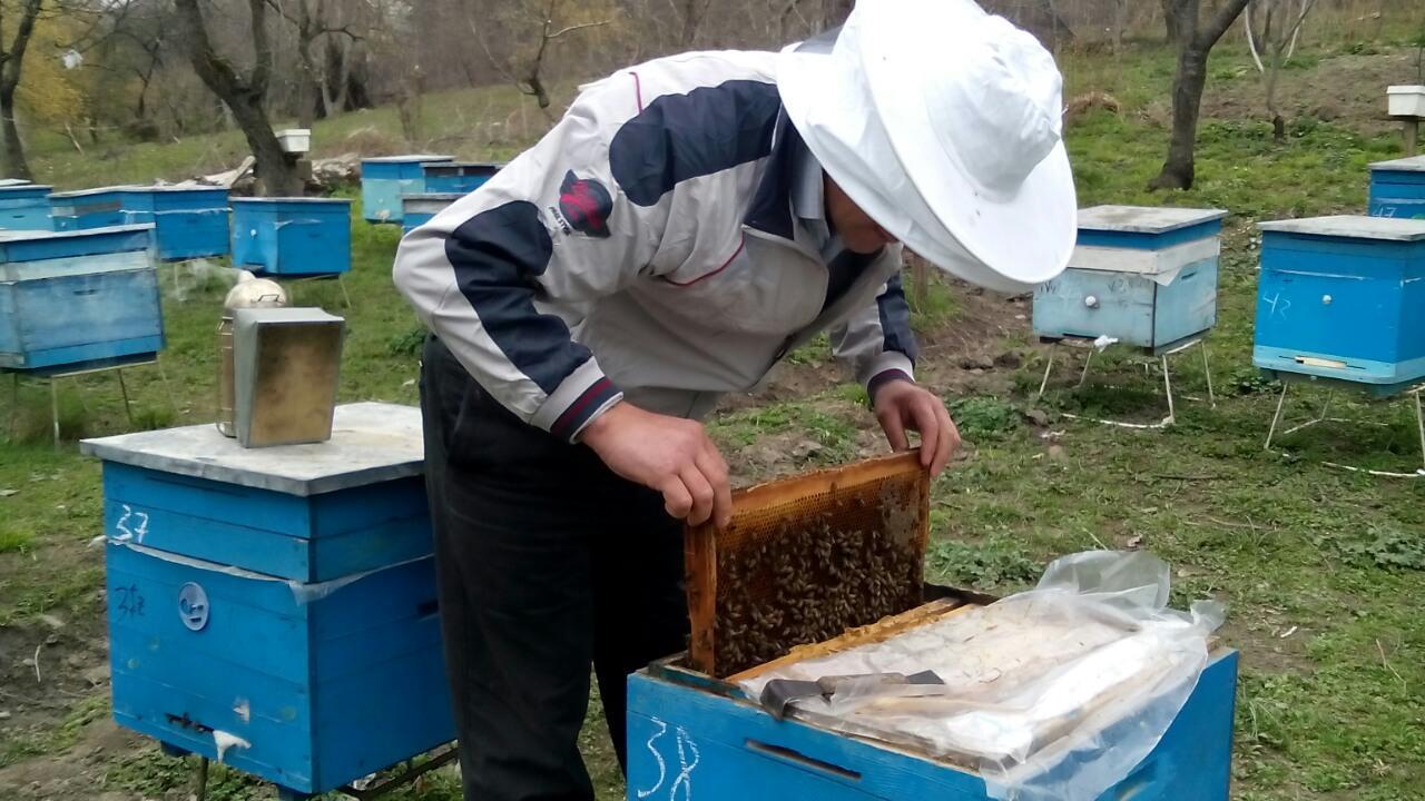 ETSN: Meşə ilə örtülü ərazilərə arı ailələrinin heç bir ödəniş olunmadan yerləşdirilməsinə icazə verilir