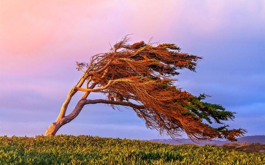 МЧС обратилось к населению в связи с ожидающимся сильным ветром