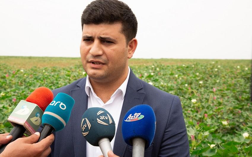"""""""Aqrolizinq"""" Hacıqabulda pambıq zərərvericilərinə qarşı mübarizəyə dair monitorinq keçirib"""