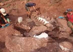 Fossils of largest dinosaur found in Argentina