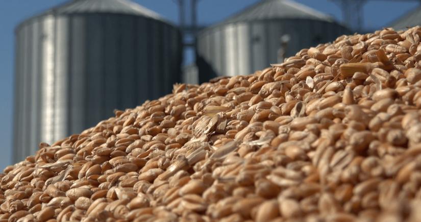 Россия вводит плавающую экспортную пошлину на зерно