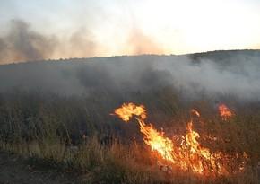 В Джалилабаде в лесу произошел пожар