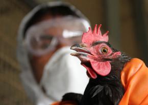 В Южной Корее выявили два новых очага птичьего гриппа