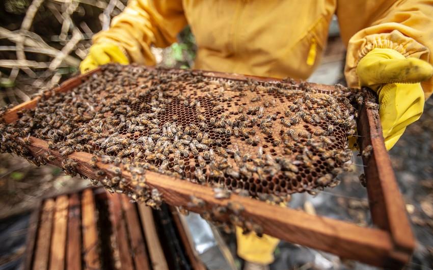 Pambıqçılıq, tütünçülük, baramaçılıq və arıçılığa subsidiya ləğv edilib?