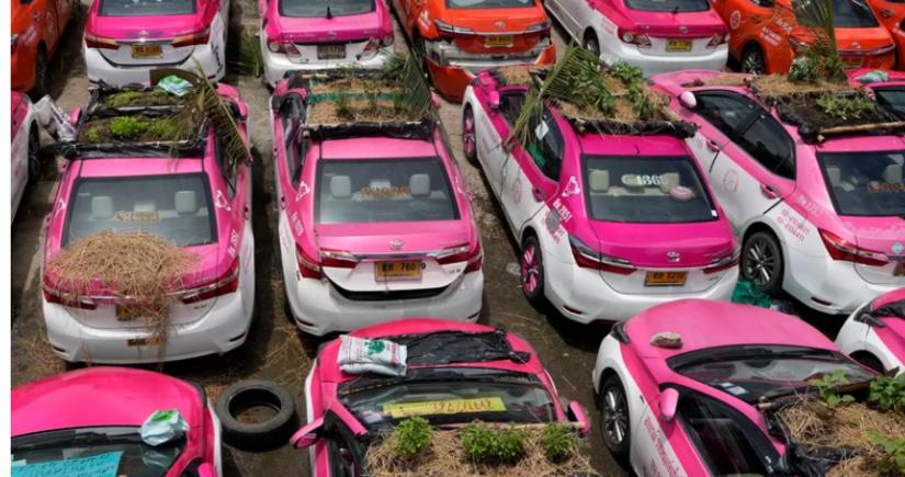 В Таиланде таксисты стали выращивать на крышах автомобилей овощи