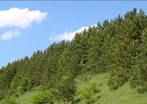 Gəncədə Ekoloji Park Kompleksi yaradılacaq