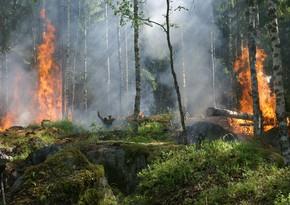 Dağıstanda meşə yanğınları tüğyan edir