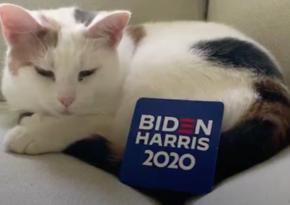 Джо Байден поделит Белый дом с кошкой