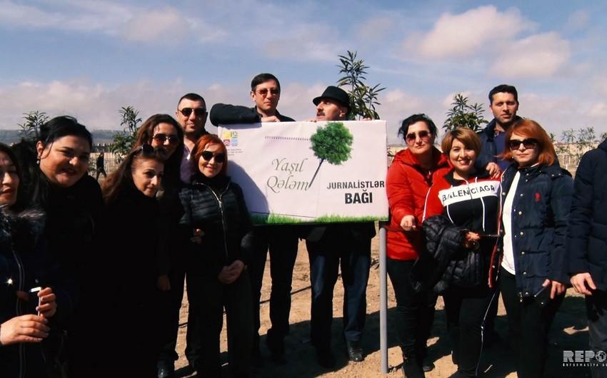 Bakıda media nümayəndələrinin iştirakı ilə ağacəkmə aksiyası keçirilib - VİDEO